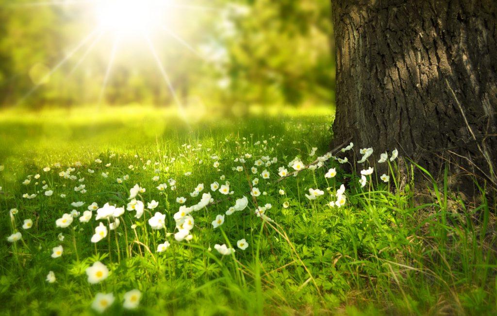 spring-276014_Larisa Koshkina auf pixabay.com